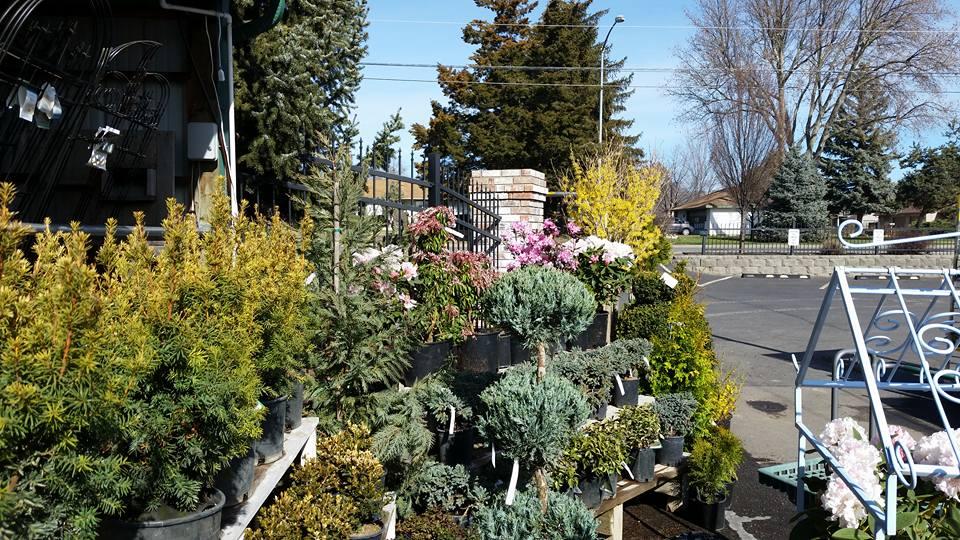 Roots Nursery U0026 Landscape